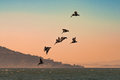 Brown Pelicans Flying Over Pacific Ocean in San Francisco Bay with hills and Bay Bridge in background at sunset Royalty Free Stock Photo