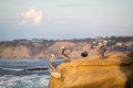 Brown pelicans rest on an eroding rock on the pacific coast in la jolla ca Stock Photo