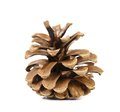 Brown pine cone isolated on white background a Stock Photo
