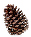 Brown pine cone isolated on white background Royalty Free Stock Photos