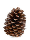 Brown pine cone isolated on white background Royalty Free Stock Images
