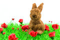 Brown rabbit at green grass Stock Photo
