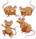 Brown rat in different poses Royalty Free Stock Photo