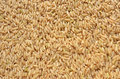 Brown rice background texture Stock Image