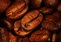 Brown roasted coffee beans Royalty Free Stock Images