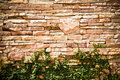 Brown rock brick wall with climber plant Stock Photo
