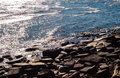 Brown rocky shore and water reflecting sunlight. Royalty Free Stock Photo