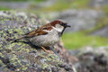 brown sparrow sitting on a stone Royalty Free Stock Photo