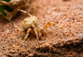 Brown spider stay on stone Royalty Free Stock Photo