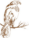 Brown strong hawk