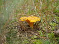 Brown toadstool in forest Royalty Free Stock Photo