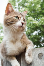 Brown and white cat sitting on a wooden fence Stock Images
