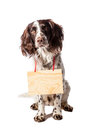 Brown white hunting dog with signs on white wooden background Stock Photos