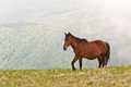 Brown wild horse Royalty Free Stock Photo