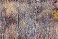 Brown winter forest with bare trees nature landscape of woodland and dry grasses Royalty Free Stock Photography