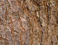 Brown bark for background Royalty Free Stock Photo