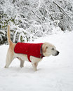Brrrrr! Royalty Free Stock Photo