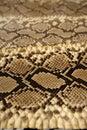 Bruine het patroon van de achtergrondslanghuid Stock Foto
