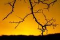 Brunches backlight orange sunrise sky Stock Photo