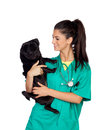 Brunette vet with a pug dog isolated on white background Royalty Free Stock Photos