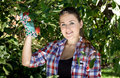 Brunette woman in garden gloves picking apples from tree Royalty Free Stock Photo