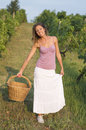 Brunnette girl in vineyard working on grape harvest with big wic attractive happy wicker basket Stock Image