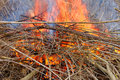 Brush fire in illinois burning pile of northern Stock Images