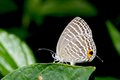 Brush-footed butterfly Stock Image