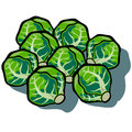 Brussel sprouts cute vector cartoon isolated with shadow Stock Photos