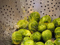 Brussel sprouts macro image in strainer Royalty Free Stock Photo