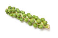 Brussel sprouts on plant stem  Royalty Free Stock Image
