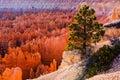 Bryce amphitheater bryce canyon national park utah usa Royalty Free Stock Photos