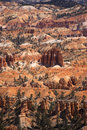 Bryce Canyon 1 Stock Image