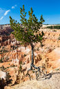Bryce Canyon Stockfoto