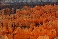Bryce Canyon hoodoos Royalty Free Stock Photo