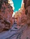 Bryce Canyon National Park Hoodoos Royalty Free Stock Photo