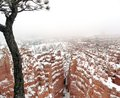 Bryce Canyon in Winter Royalty Free Stock Photography