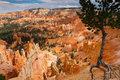 Bryce national park tree at the rim of Royalty Free Stock Photos
