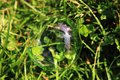 Bubble in the green grass as nice natural background Royalty Free Stock Images