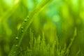 Bubbles and algae Royalty Free Stock Photo