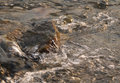 Bubbling river close photo of a stone in the stream of Royalty Free Stock Photo