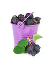 Bucket with berries on white background Royalty Free Stock Image