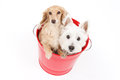 Bucket and dogs Royalty Free Stock Photo