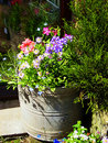 Bucket & flowers Stock Images