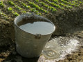 Bucket full of water near vegetable bed Royalty Free Stock Photos