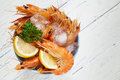 Bucket of king prawns on ice Stock Photography