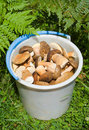 Bucket with mushrooms 7 Royalty Free Stock Photo
