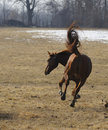 Bucking horse Royalty Free Stock Images