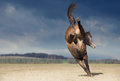 Bucking horse on nature background brown Stock Photo