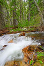 Bucking mule creek in wyoming rapids of the bighorn national forest of Stock Photo